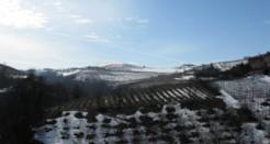 Terre di Vigne, serate di degustazione a Lainate(MI)